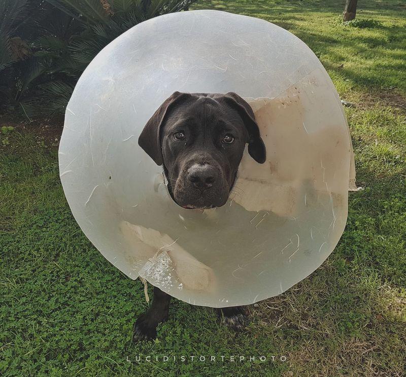 One Animal Dog Pets Cane Lucidistortephoto Eboli Love First Eyeem Photo