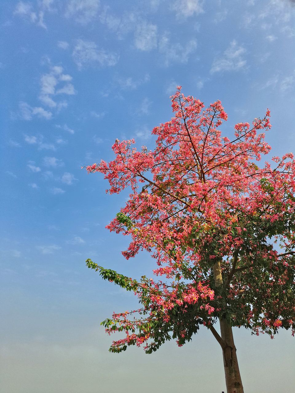flower, tree, beauty in nature, growth, nature, low angle view, blossom, fragility, freshness, branch, sky, day, no people, springtime, tranquility, pink color, outdoors, cloud - sky, close-up