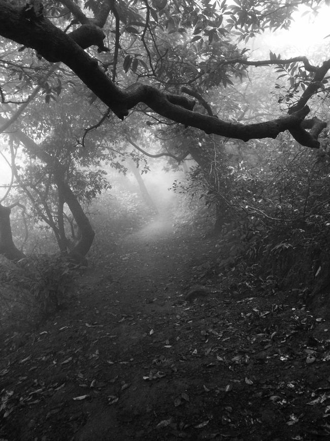 Way too dark on hill of Anjaneri Fog Beauty In Nature Tree Branch Nature Non-urban Scene Day No People