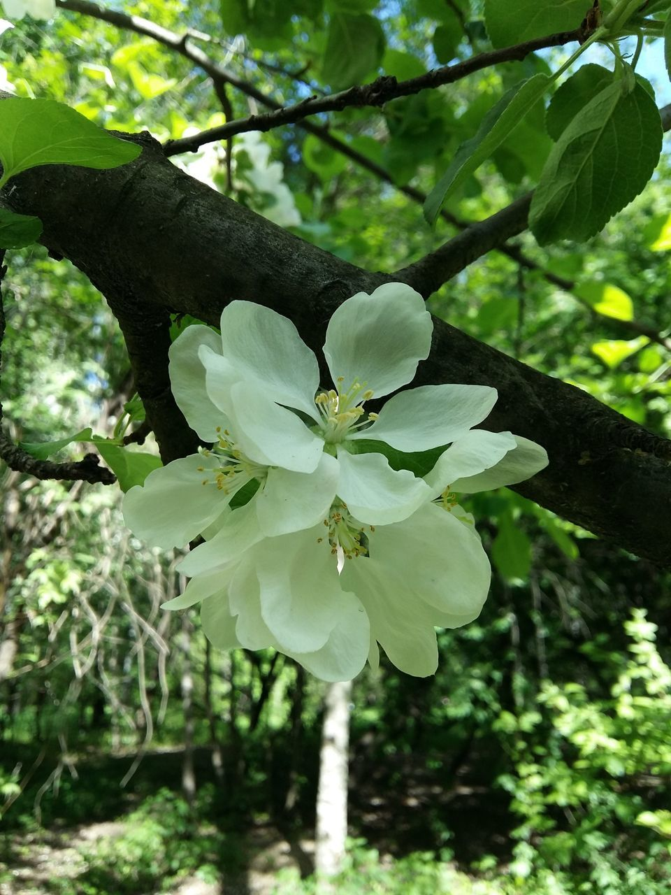 growth, flower, tree, nature, beauty in nature, fragility, branch, no people, leaf, petal, plant, freshness, outdoors, day, close-up, flower head