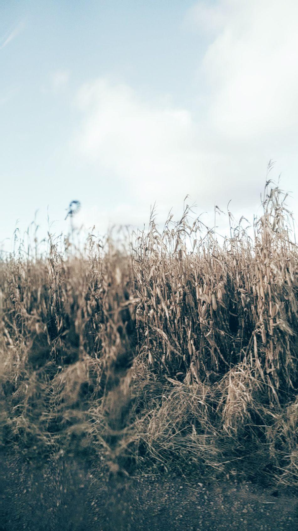 Enjoying Life Landscapes With WhiteWall Gods Beauty Here Belongs To Me Roadlesstravelled