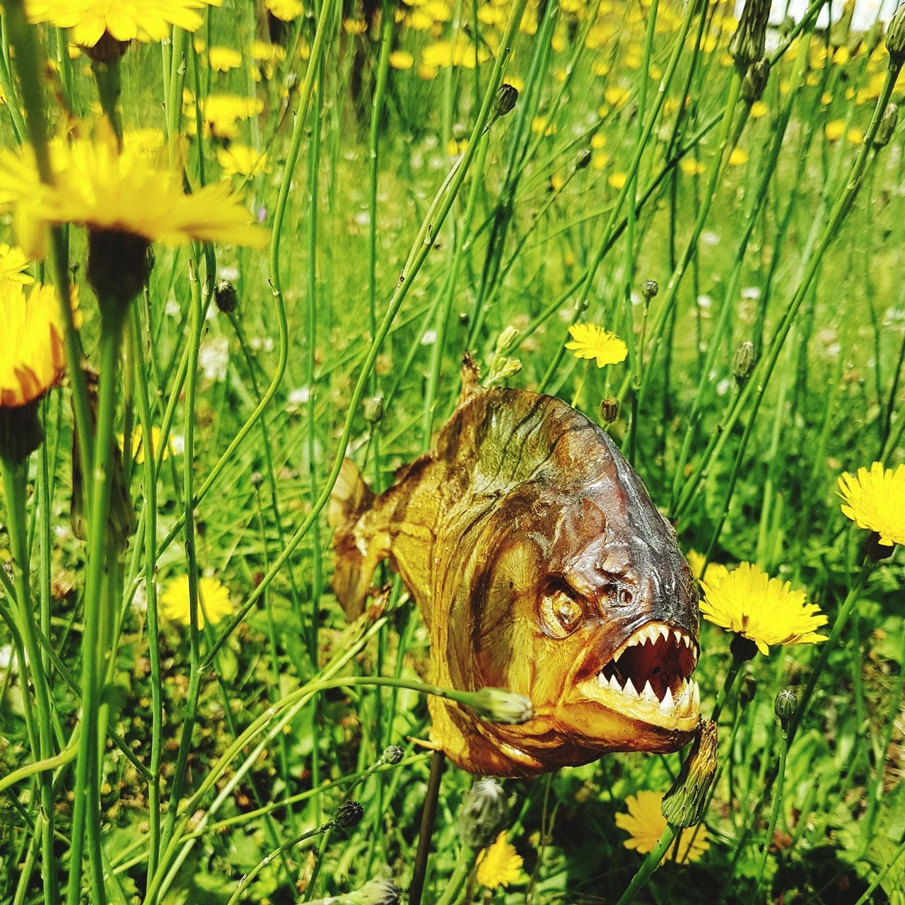 Fisch One Animal Animals In The Wild Outdoors Swimming Green Color Piranhas Recklinghausen Grass Kunsthaus_Lay