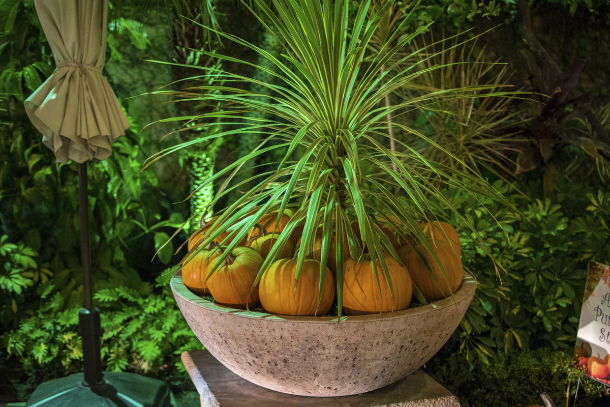 TakeoverContrast Potted Plant No People Pumpkin Plant Green Color Night Life Street Photography Nikon California Pumpkins Halloween October Culture Art Photography Adventure Night Artwalk Riverside Autumn Beauty Digital Photography Artist Mission Inn