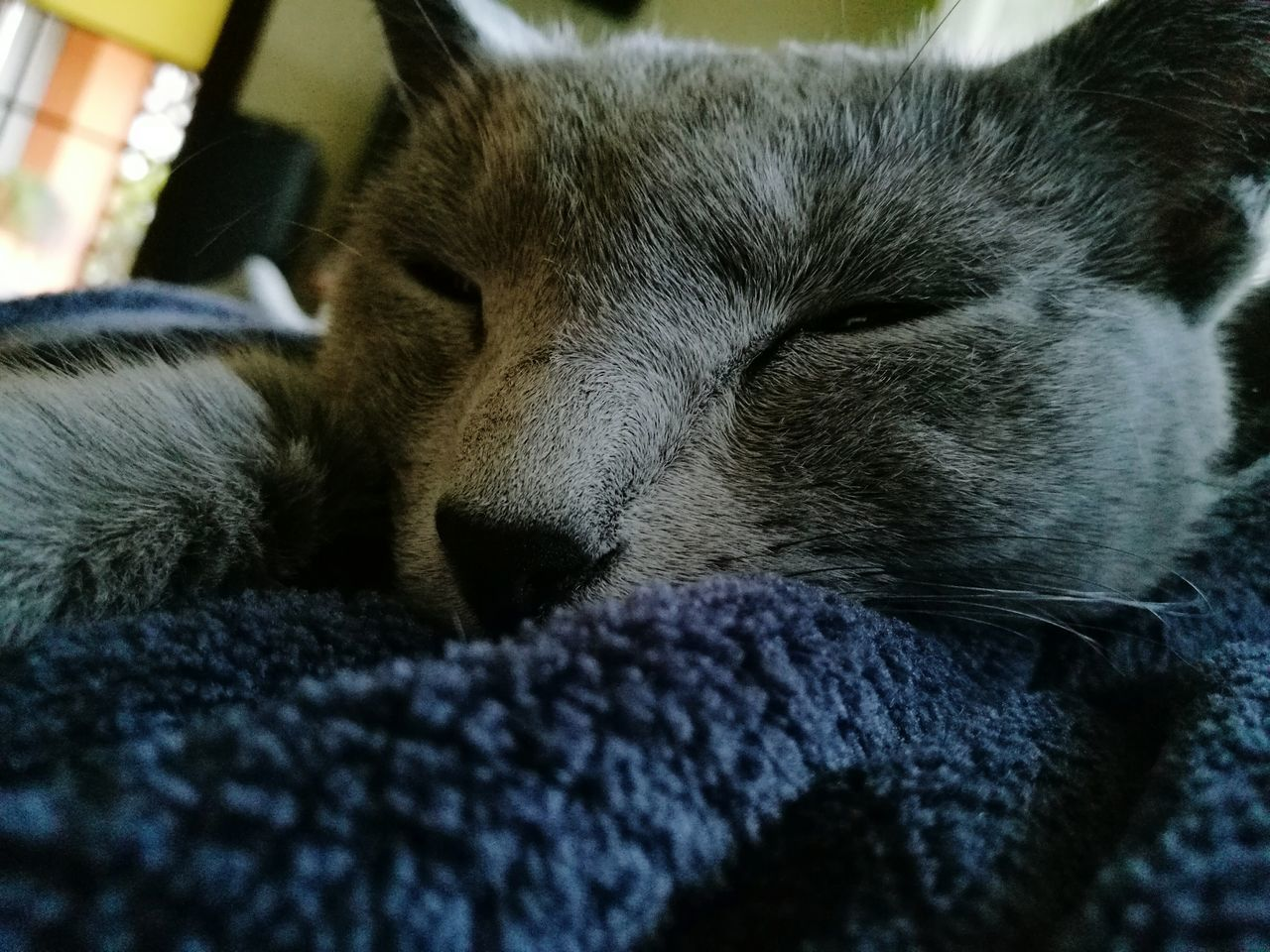 animal themes, mammal, one animal, domestic animals, relaxation, pets, indoors, sleeping, close-up, no people, lying down, domestic cat, bed, nature, day