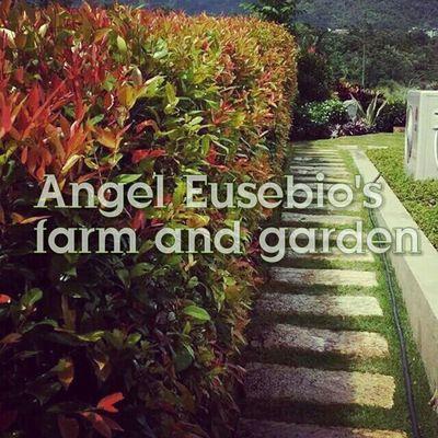 EyeEm Best Shots - Landscape Good Service Quality Satisfaction Originality Landscaping_services