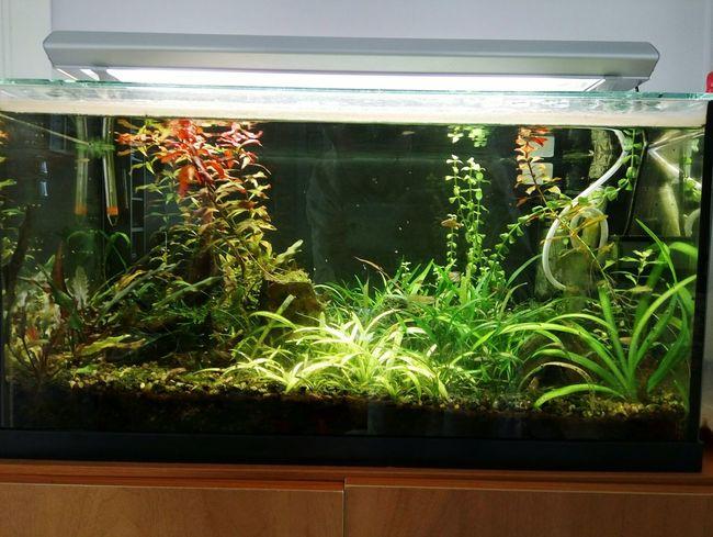 Aquarium Aquarium Plants Fish