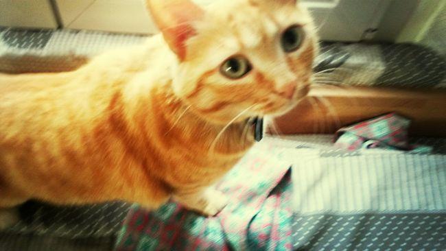Micia Cat♡ Red