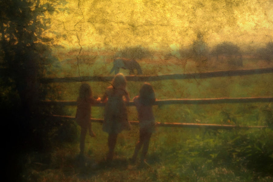 Three girls in a dreamy field on a summer day. Colors Glowing Children Dream Fun Morning Mut Textured  Autumn Day Forest Friendship Girls Grass Leasure Activity Mood Nature Outdoors Peaceful Playing Watching Real People Standing Summer Three Girls Tree