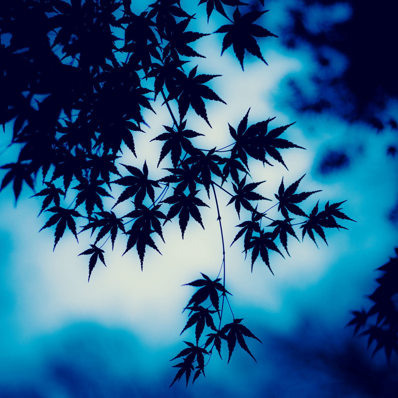 no people, low angle view, sky, outdoors, day, nature, tree, beauty in nature, close-up
