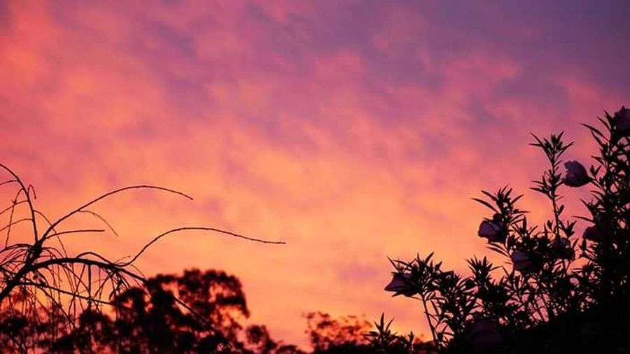 Sunset Silhouette Tree Scenics Multi Colored Sky With MattGee