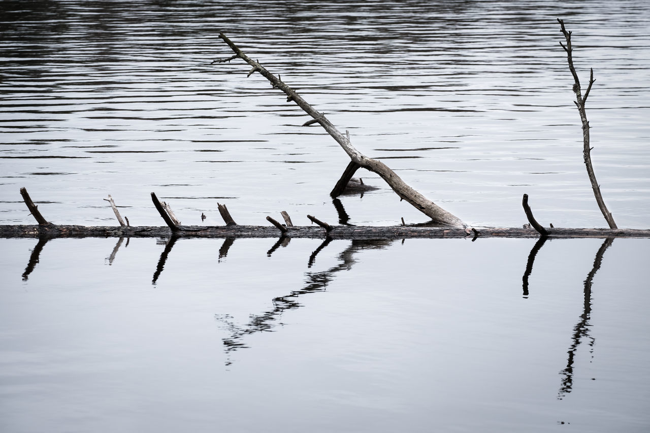 Tree trunk in the water. Abstract Art Day Dead Deadwood  Lake Lake View Natural Nature No People Outdoors Pond Reflection Simple Standing Water Tranquility Tree Trunk Water Waterfront