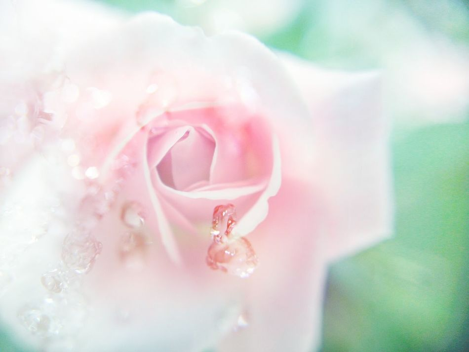 Beautiful stock photos of single, Beauty In Nature, Close-Up, Day, Drop