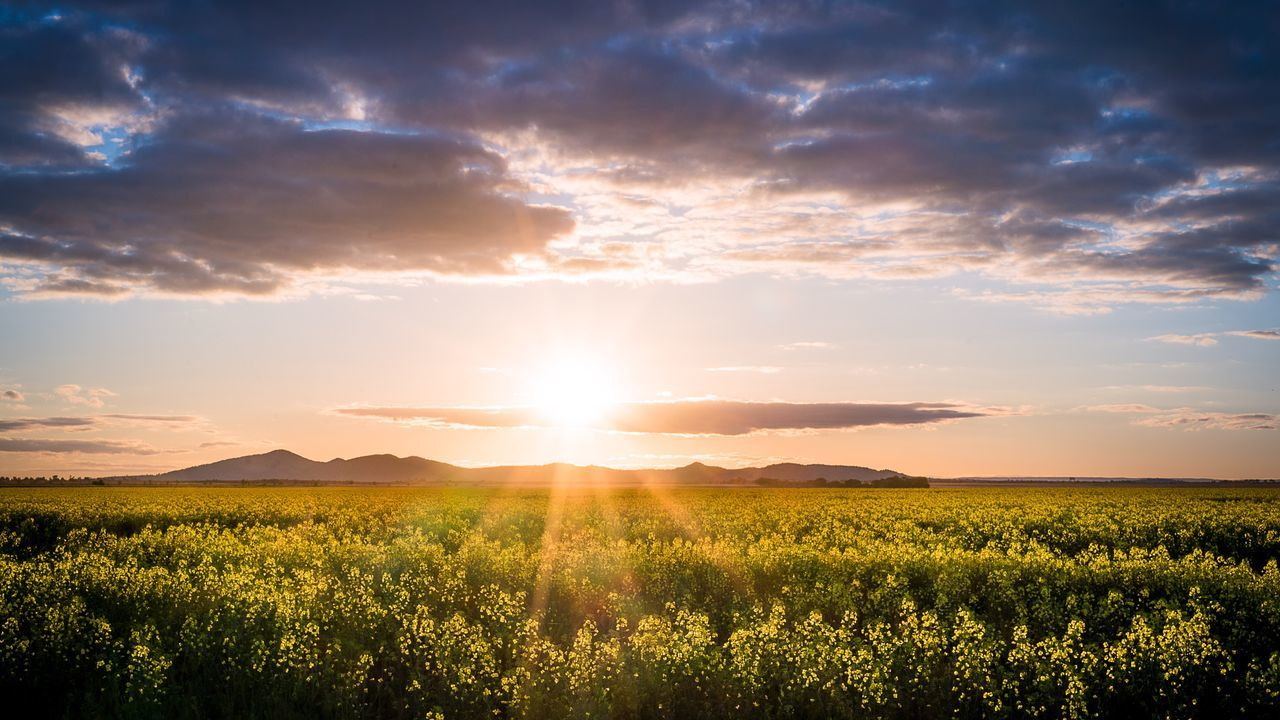 EyeEm Selects You Yangs Nature Sunset Tranquility Landscape Field Agriculture Flower You Yangs Melbourne