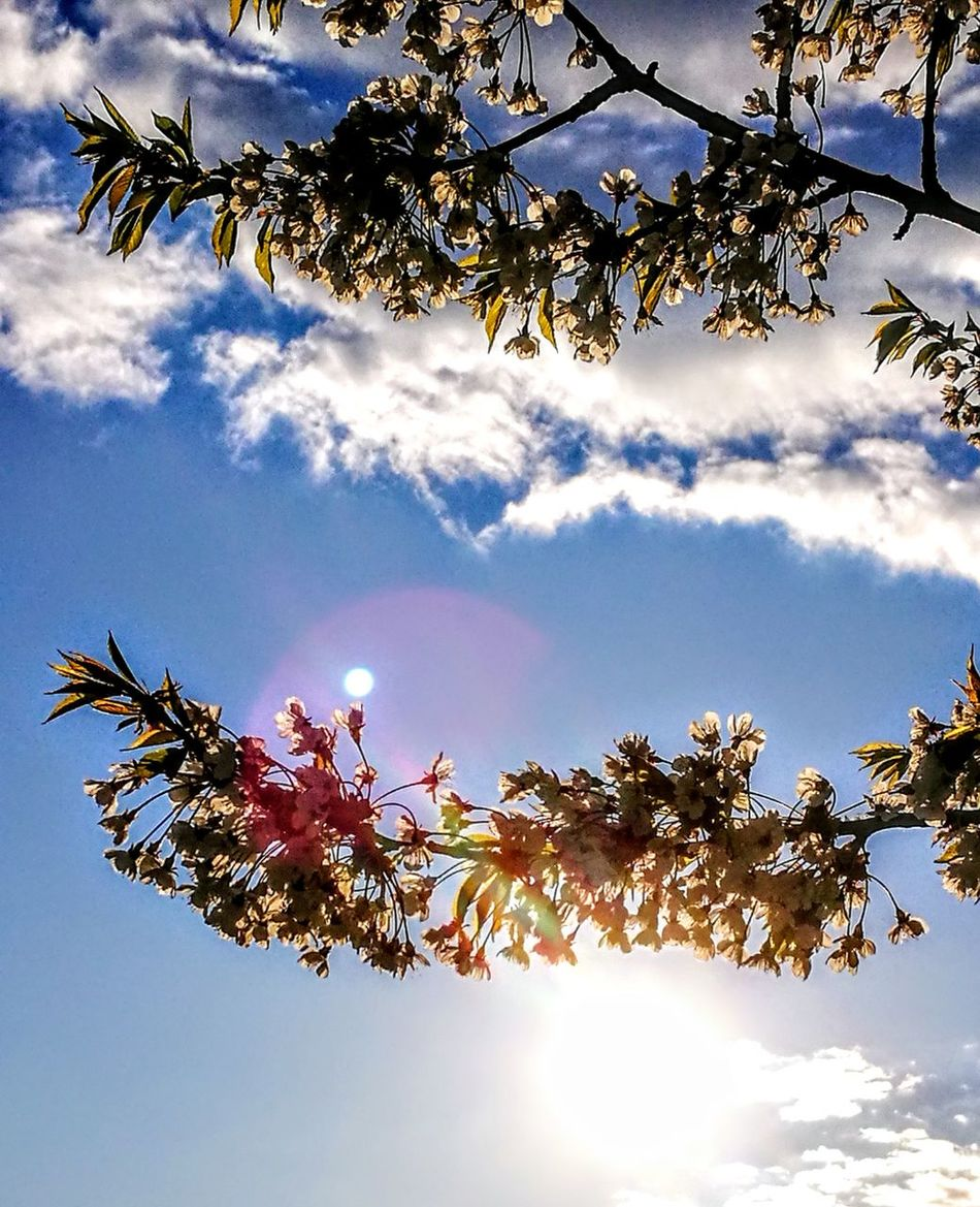 Springtime in Germany.... Tree Sky Nature Beauty In Nature Cloud - Sky Blue Outdoors Day Low Angle View No People Flying Branch Water Bird Landscape Nature Originalpicture GetbetterwithAlex