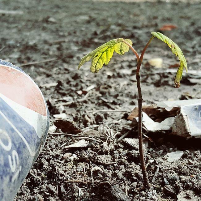 Defiance Showcase May Springtime Urban Lifestyle Urban Nature