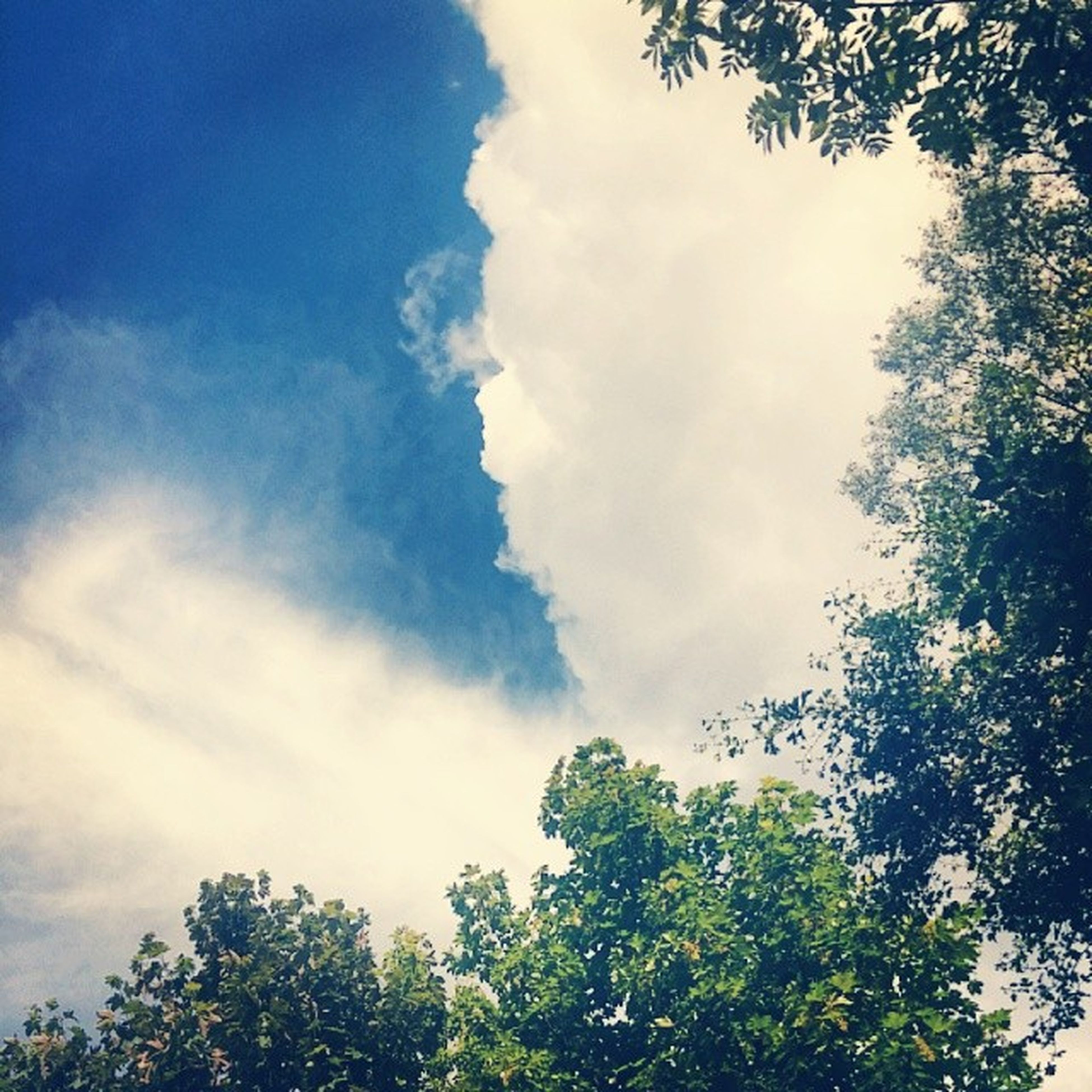tree, low angle view, sky, growth, tranquility, beauty in nature, nature, cloud - sky, scenics, branch, tranquil scene, high section, cloud, treetop, blue, cloudy, green color, day, outdoors, no people