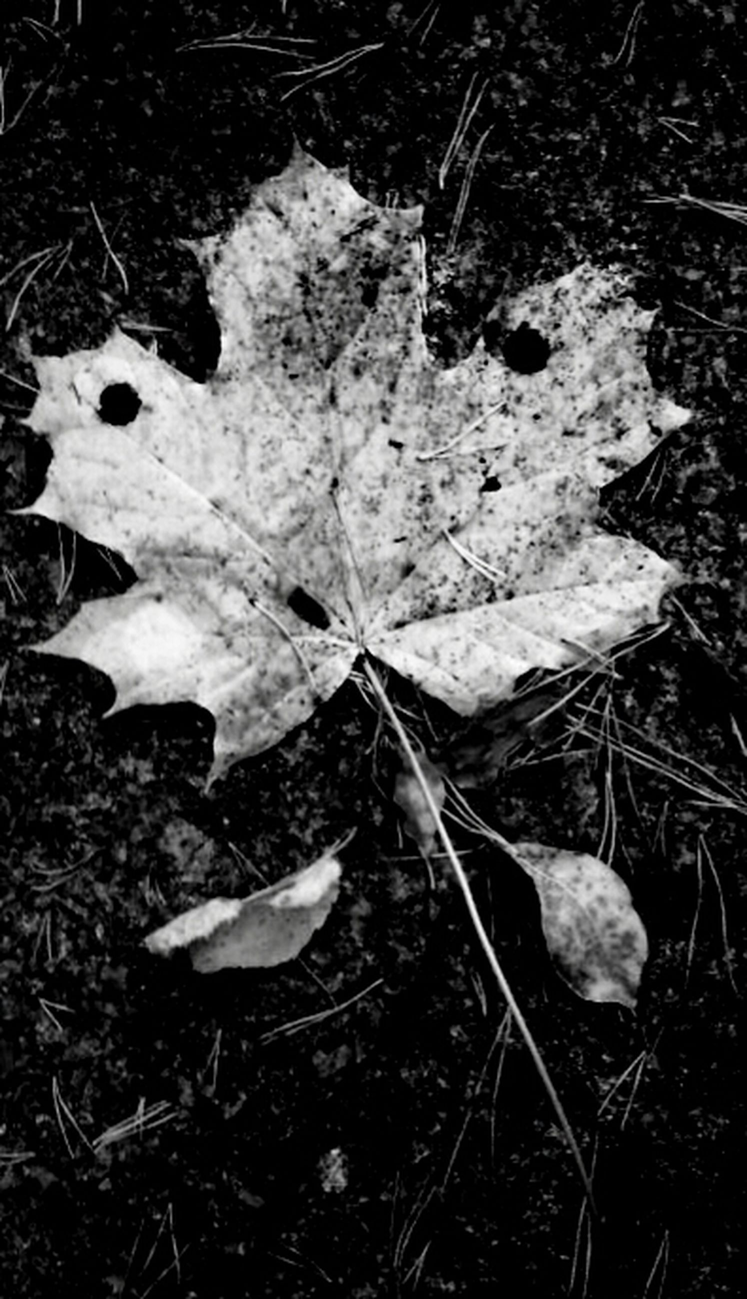 leaf, dry, autumn, leaves, change, nature, leaf vein, season, close-up, high angle view, fallen, fragility, natural pattern, ground, growth, plant, maple leaf, field, beauty in nature, day