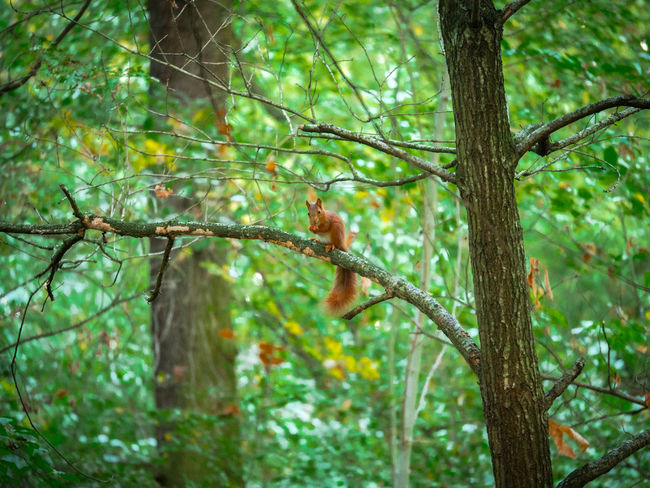 Squirrel Animal Themes Animal Wildlife Animals In The Wild Branch Day Mammal Nature No People One Animal Outdoors Tree