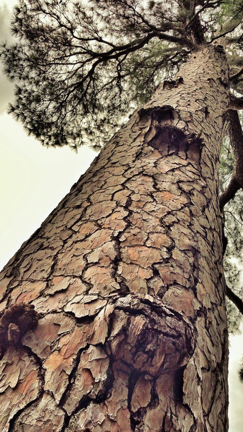 Taking Photos Lovemyfilters Walking Around Sun And Trees Backyard Hugging A Tree Tree Bark Nature Textures