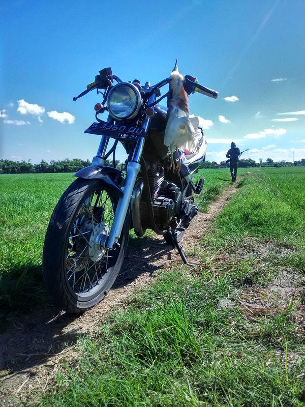 The killer bird 😢 Save Birds Save Planet Bluesky Motorcycle Outdoors Green World Jawa Timur INDONESIA First Eyeem Photo