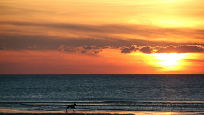 Horizon Over Water Sunset Sea Water Scenics Beach Idyllic Tranquil Scene Beauty In Nature Tranquility Orange Color Shore Sun Nature Sky Vacations Vibrant Color Majestic Cloud - Sky Tourism Germany Sylt Dog On Beach