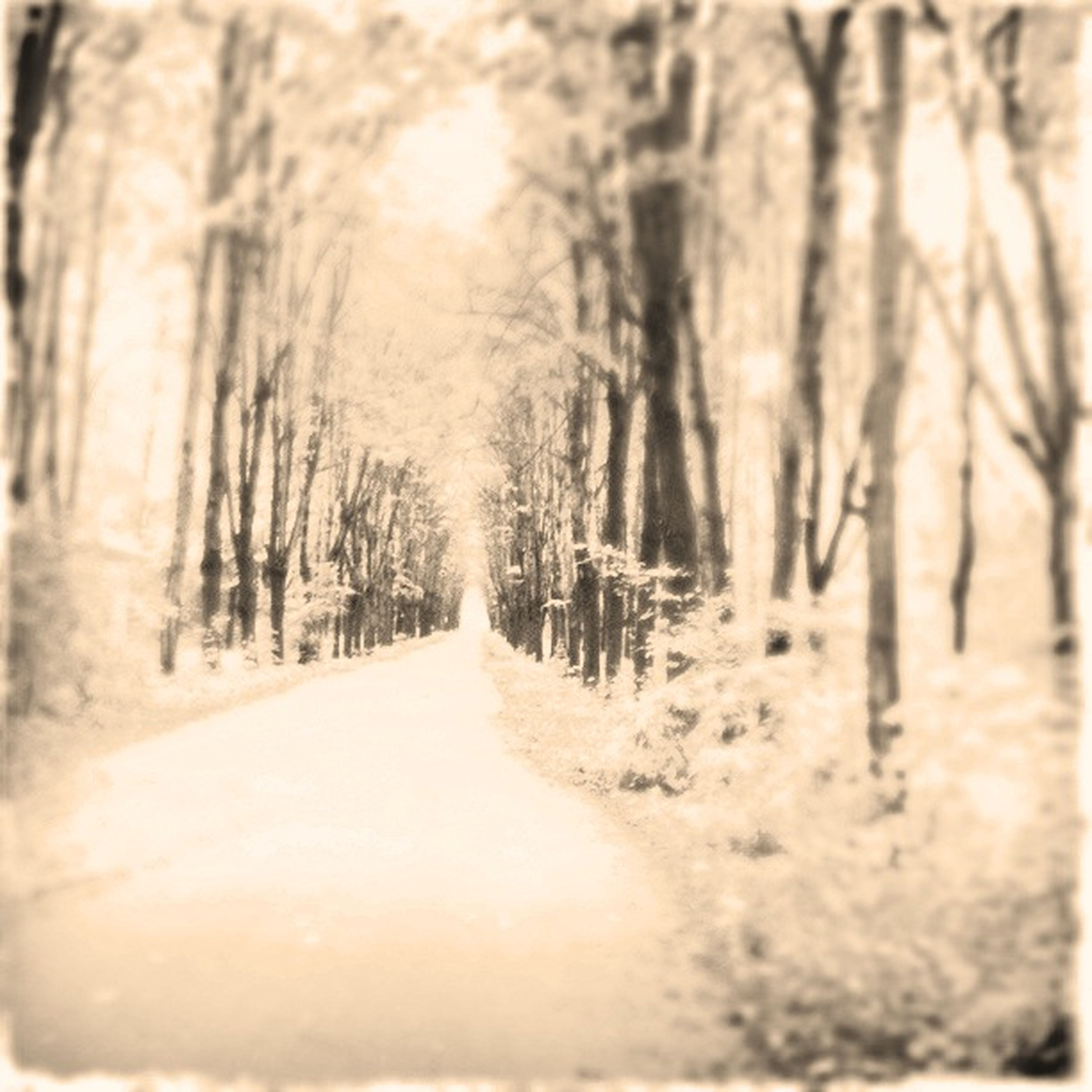 the way forward, tree, diminishing perspective, tranquility, vanishing point, forest, nature, road, tranquil scene, transportation, winter, surface level, snow, empty road, dirt road, beauty in nature, no people, growth, landscape, outdoors