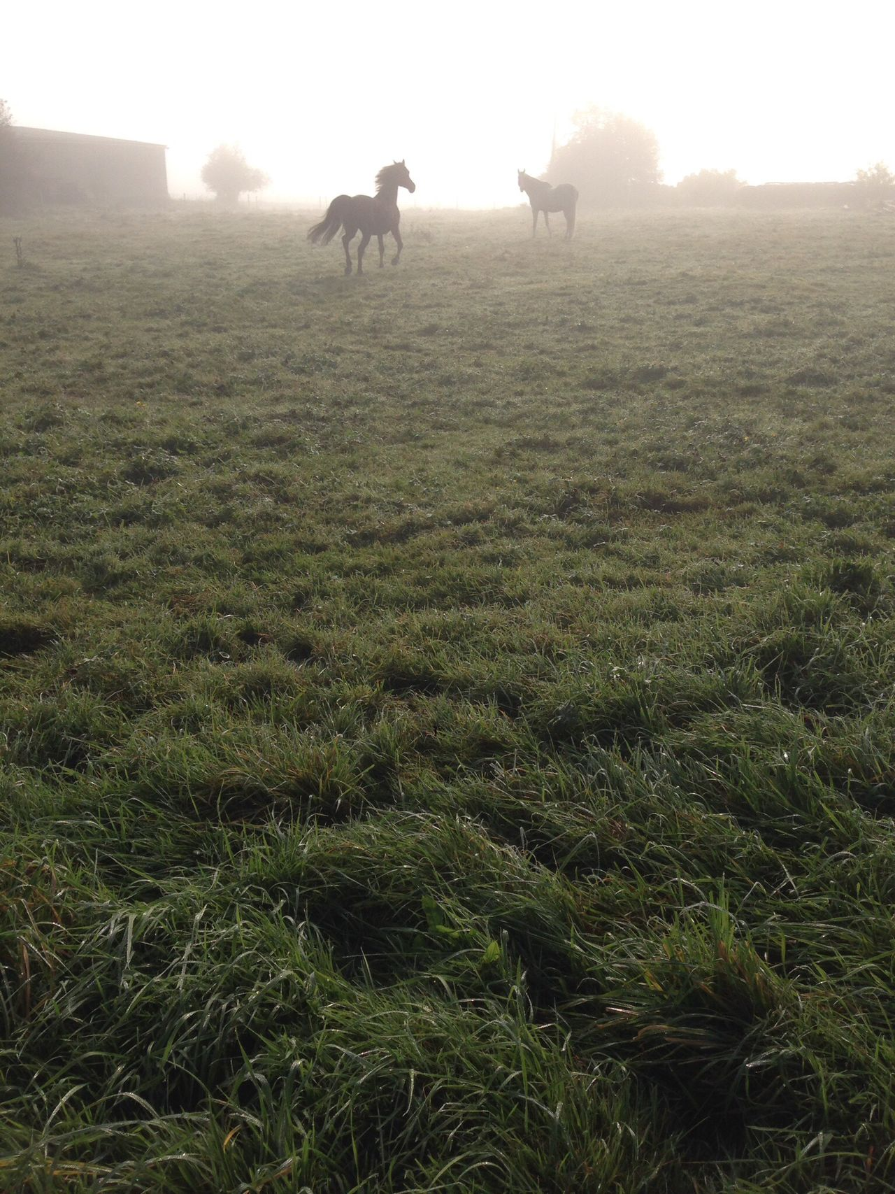 Horses Autumn Morning Countryside