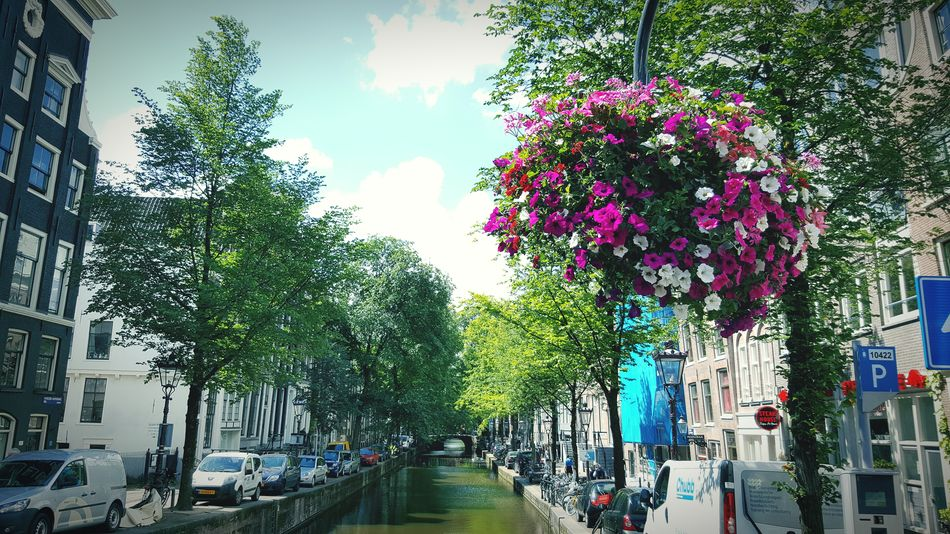 Amsterdam River Flowers Hanging Flowers Roses Canal Street Green Water And Flower Amsterdamcity Amsterdam Canal
