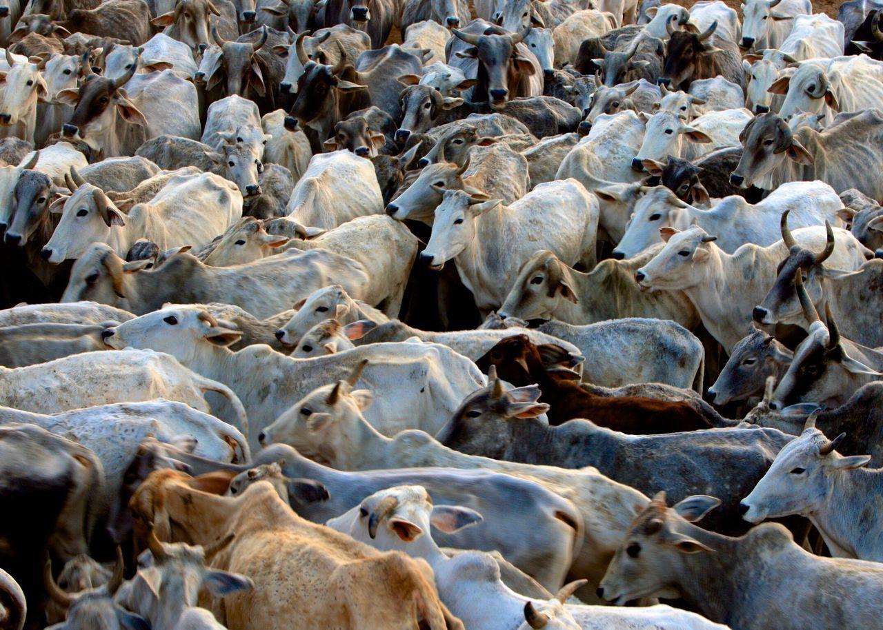 Full Frame Shot Of Cows