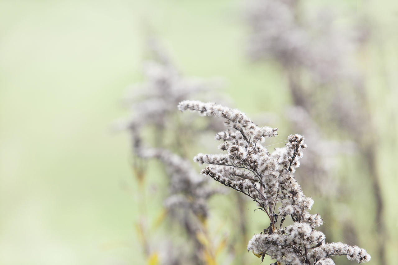 Agriculture Beauty Beauty In Nature Biology Branch Close-up Day EyeEm Nature Lover Field Flower Fragility Growth Nature No People Outdoors Pastel Power Pine Wood Soft Softness Tree Winter