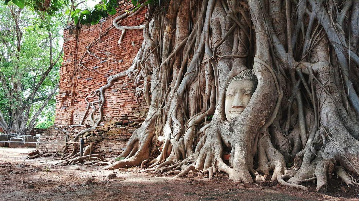 Ancient Architecture Ancient Civilization Buddha Bodhitree Wall Brick Wall Discovering Showcase June