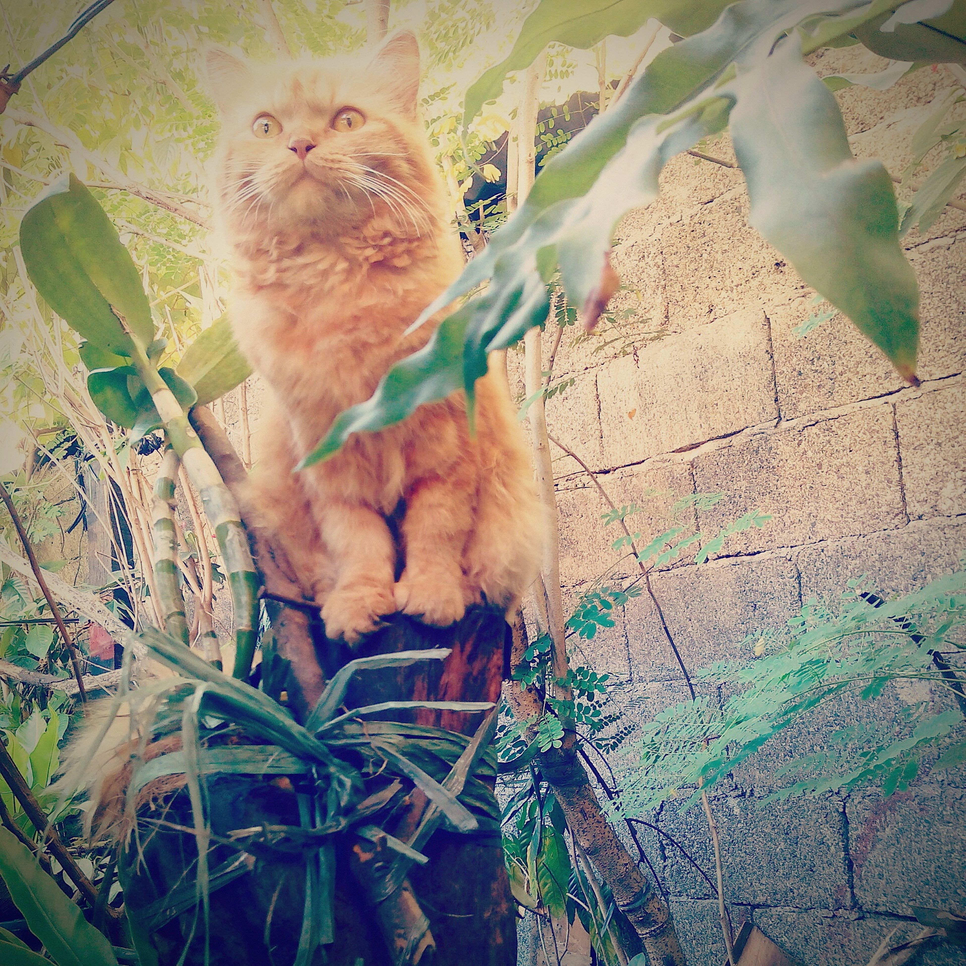 animal themes, mammal, one animal, domestic animals, pets, domestic cat, cat, high angle view, leaf, feline, wildlife, plant, full length, no people, animals in the wild, relaxation, outdoors, day, sitting, young animal