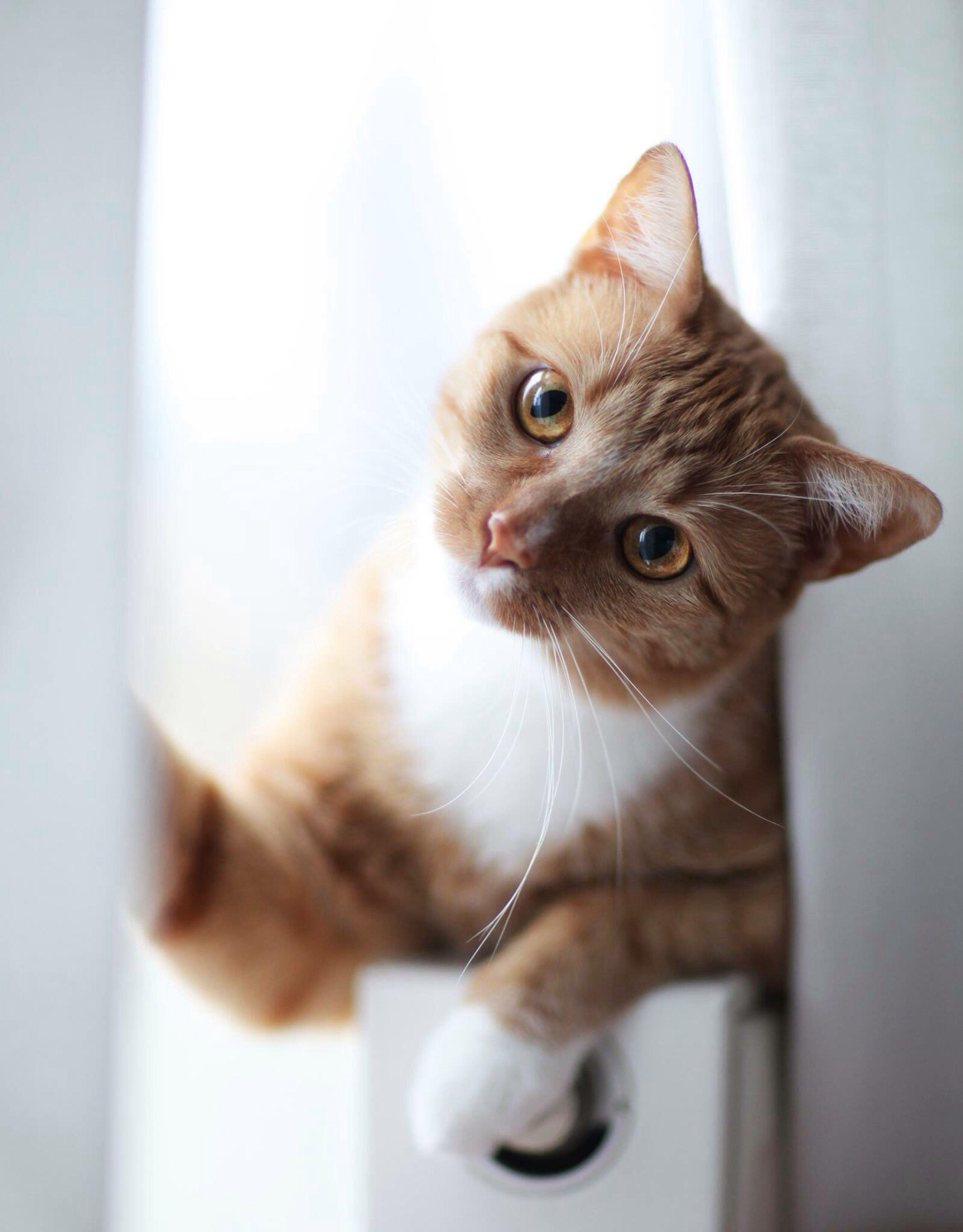 Cat Lovers Hello World Love ♥ Cute Pets Cat Eyes Cat♡ Animals First Eyeem Photo