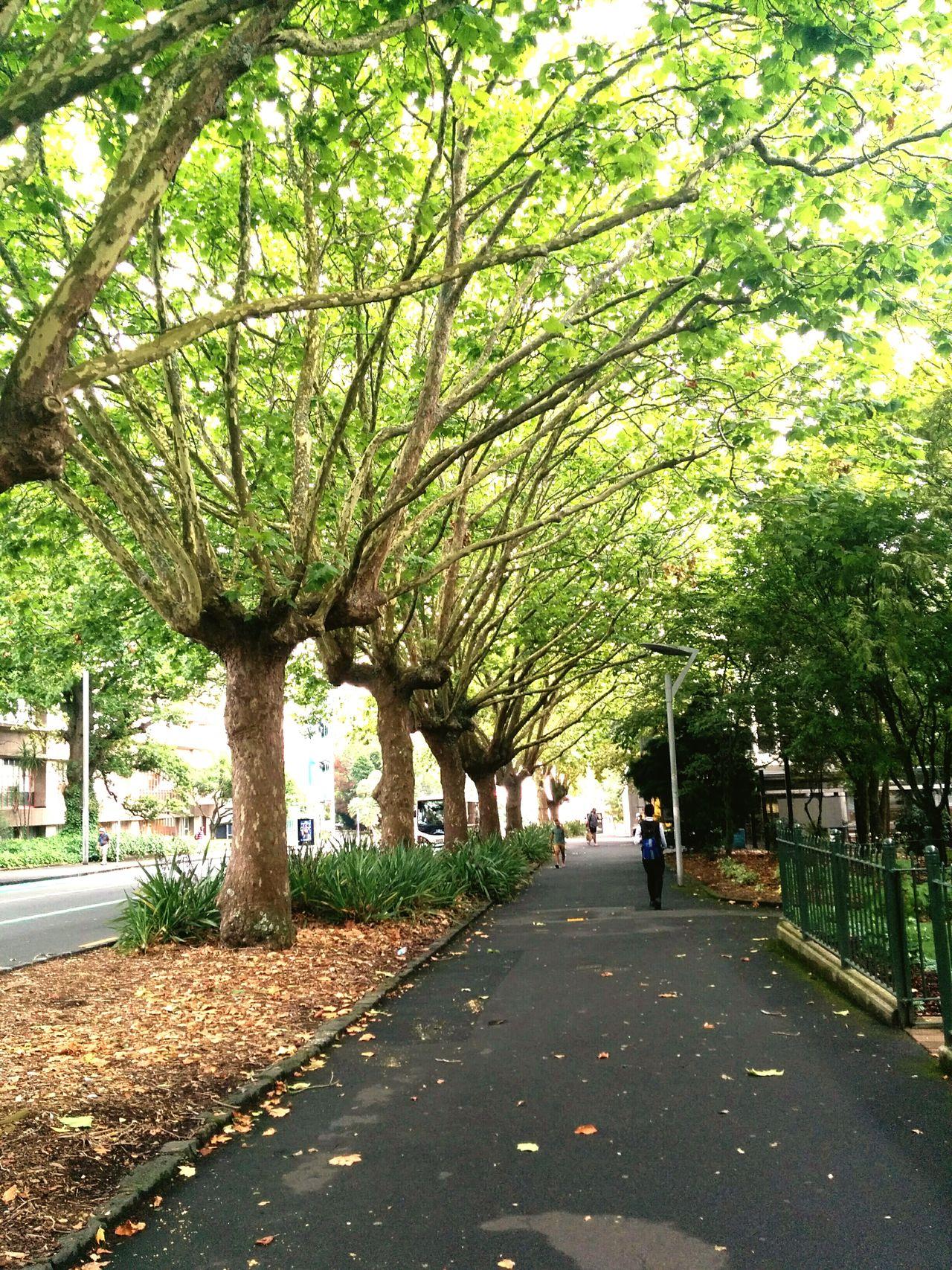 Trees Nature Sidewalk Life 2 Life 2 Filter