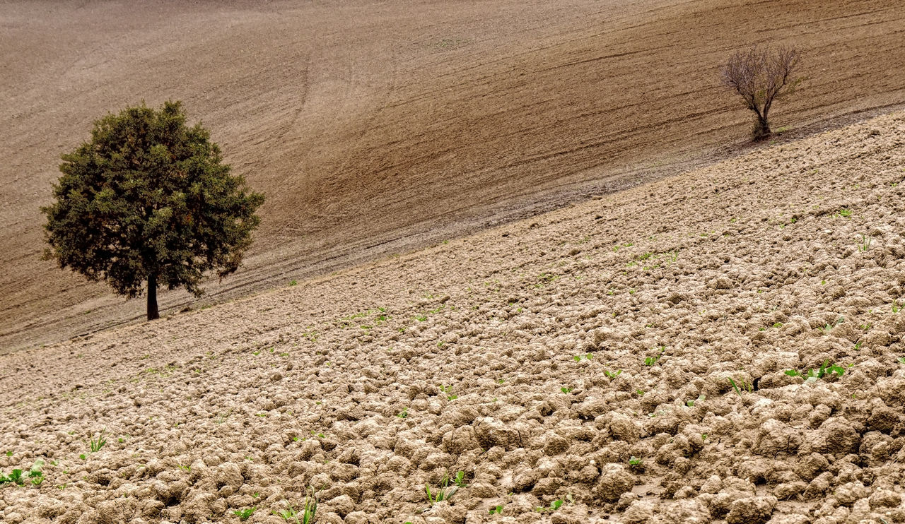 Autumn Countryside Dry Tree Field Handover Italy Landscape Life Cycle Life Death Luxuriant Tree Nature Nature No People Plowed Field Tree Trees