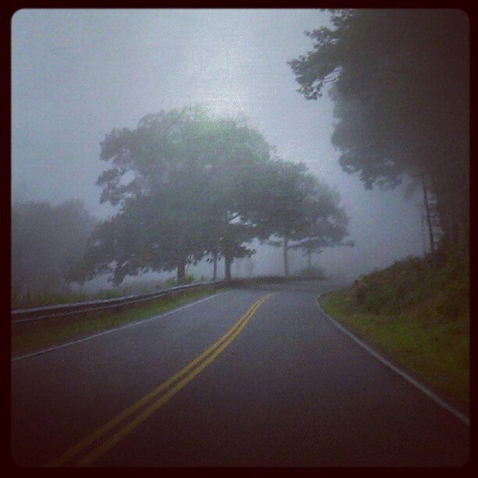 Fog Gloom Foggyroad Rainy Driving Road