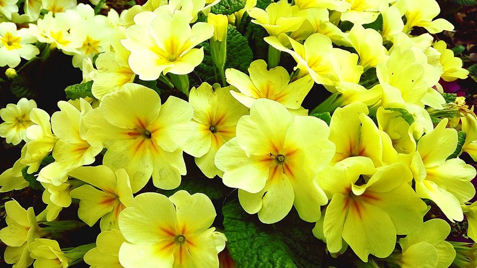 Yellow. <3 Yellow Yellowflowers Beautiful Wonderful Wonderofcreation Wonderofnature Flowers Yellow Love Loveyellow