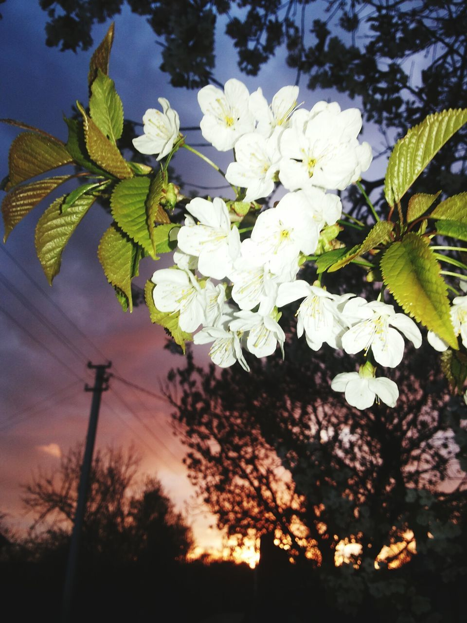 growth, flower, nature, tree, beauty in nature, blossom, fragility, no people, plant, spring, outdoors, blooming, freshness, branch, sky, day