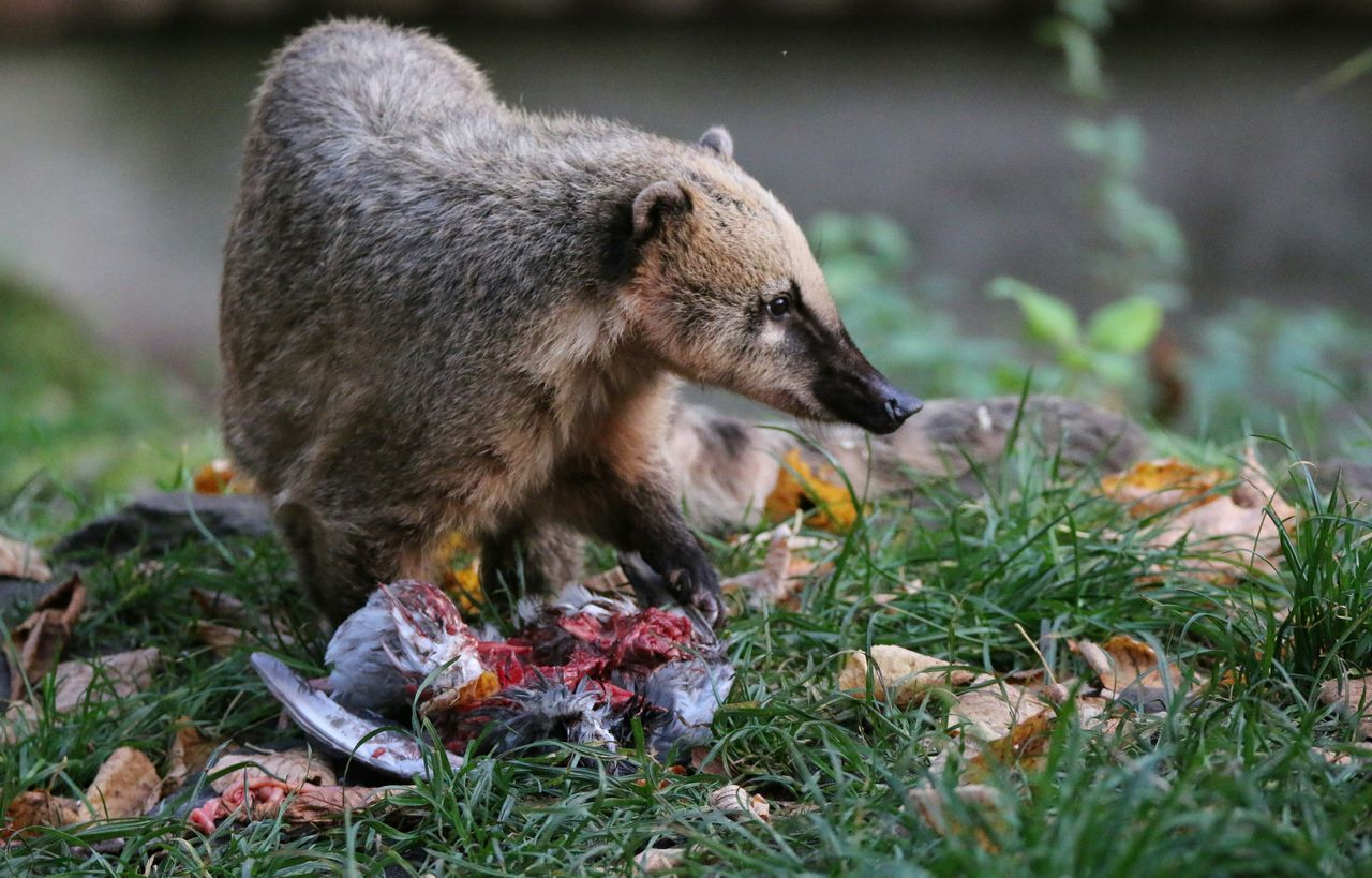 Beautiful stock photos of baer,  Animal Themes,  Animals In The Wild,  Carnivorous,  Day