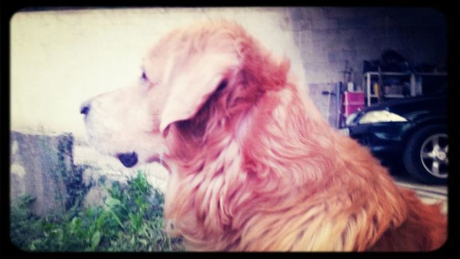 Vick mon chien ♡ Pets I Love My Dog Dog Dogstagram