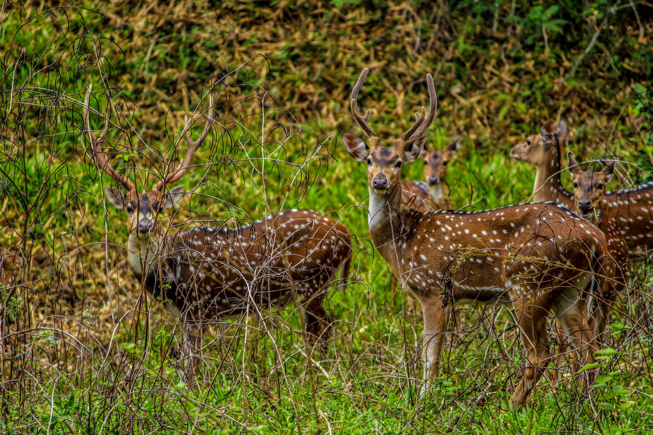 Deers Animals Forest Photography Topslip Deers Nature Beauty Peace Hanging Out Photographers_of_india My Photography Happiness♥ Beauty In Nature Lovelynatureshots