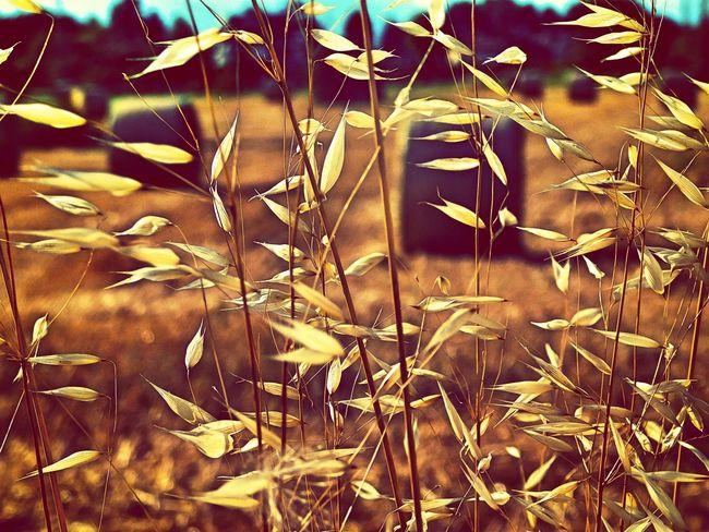 Nature Outdoors Rural Scene Rural Rural Life RuralTreasures  Rural Exploration Ruralphotography RuralTreasures  Rural Photography