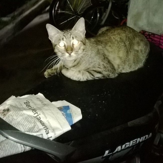 Kucing ni dri pagi ddk kat seat moto, jadi guard gamaknye. tp ni kucing ke robot. Nofilter Shiningeyes Lagenda Legends