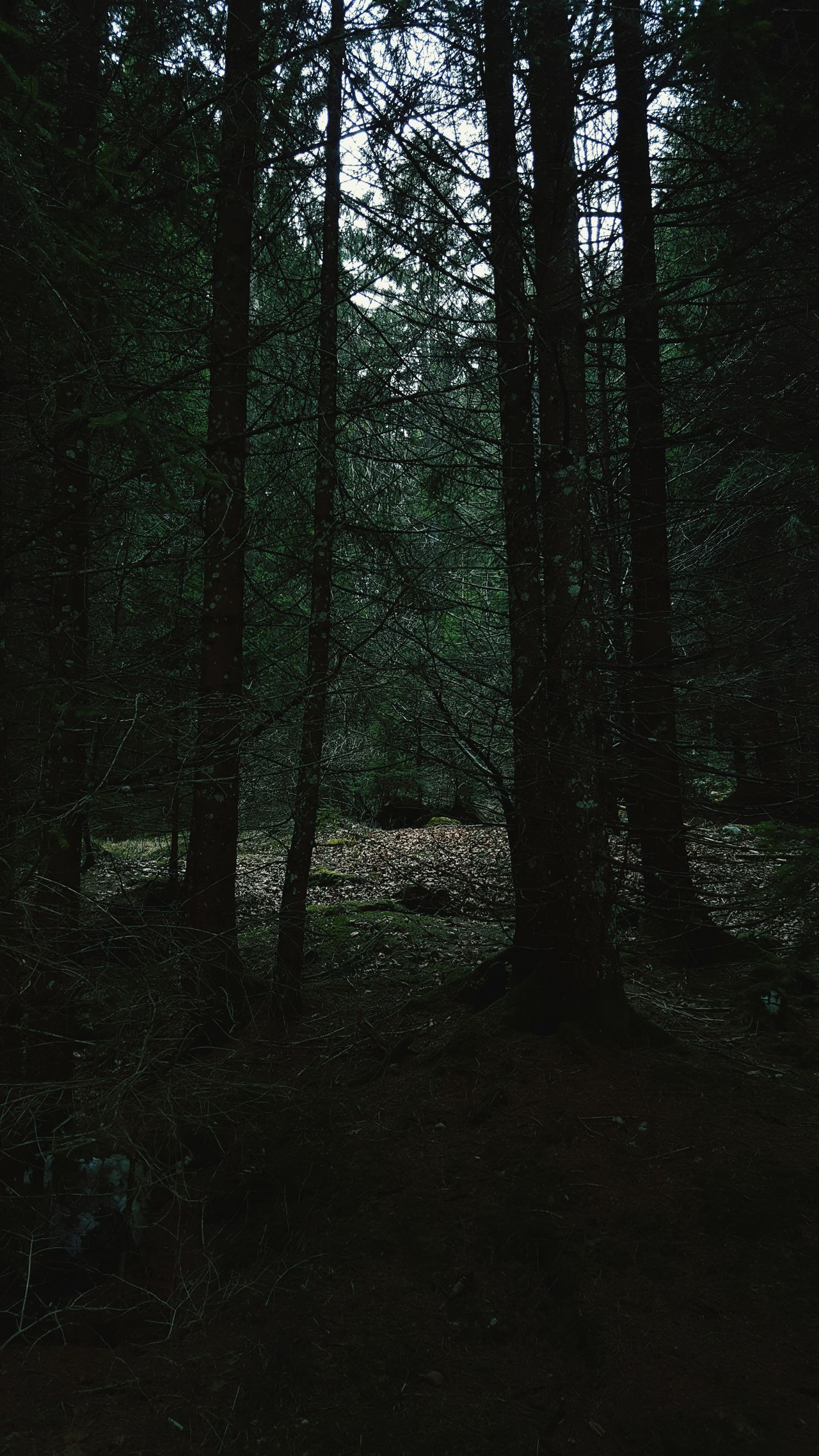 Forest pt. 2 Tree Nature Forest Tranquility Growth No People Tranquil Scene Beauty In Nature Landscape Outdoors Day Tree Trunk Darkness And Light Italy🇮🇹 Asiago Shooting Cellphone Photography Photography Nature Photography Photo Of The Day Trees Nature Trees And Nature Forest Photography Scenics