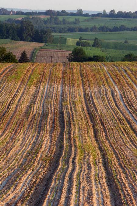 Agriculture Day Farm Field Landscape Nature Poland Polen Rural Scene Scenics Świętokrzyskie Świętokrzyskie