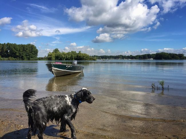 It's a dog's life Detroit River English Setter Summer Day Small Island Michigan Summer On The Beach Small Boat Pointer Dog Bird Dog Dogs Life