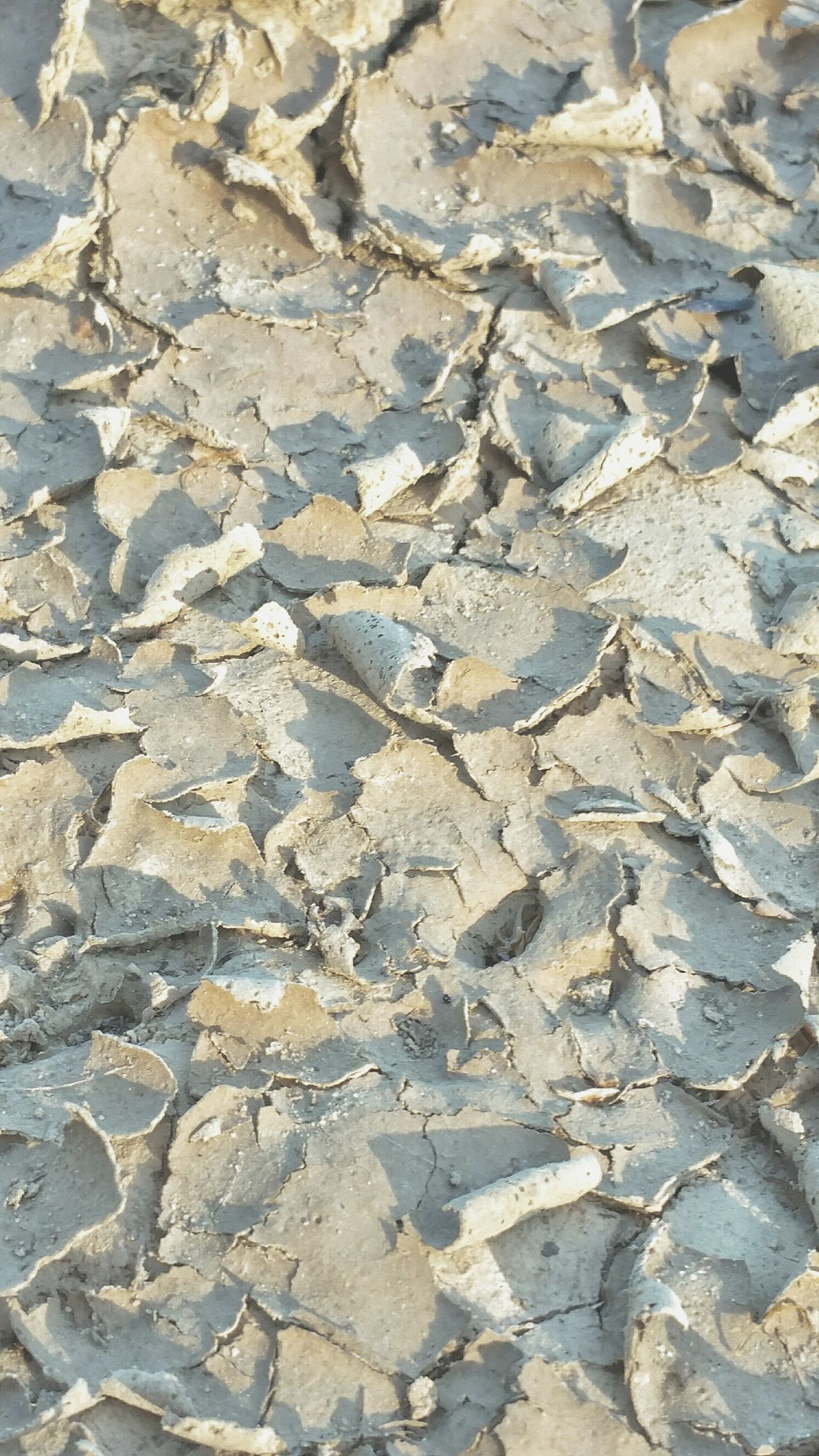 Full Frame High Angle View Sunlight Backgrounds Day Nature No People Outdoors Close-up Paw Print Dirt Mud Cracks Cracks In The Earth Curled Up Dried Mud Shapes And Forms Pattern Patterns In Nature Earth Dried Up Shapes And Design Lights And Shadows Lines And Shapes Textures
