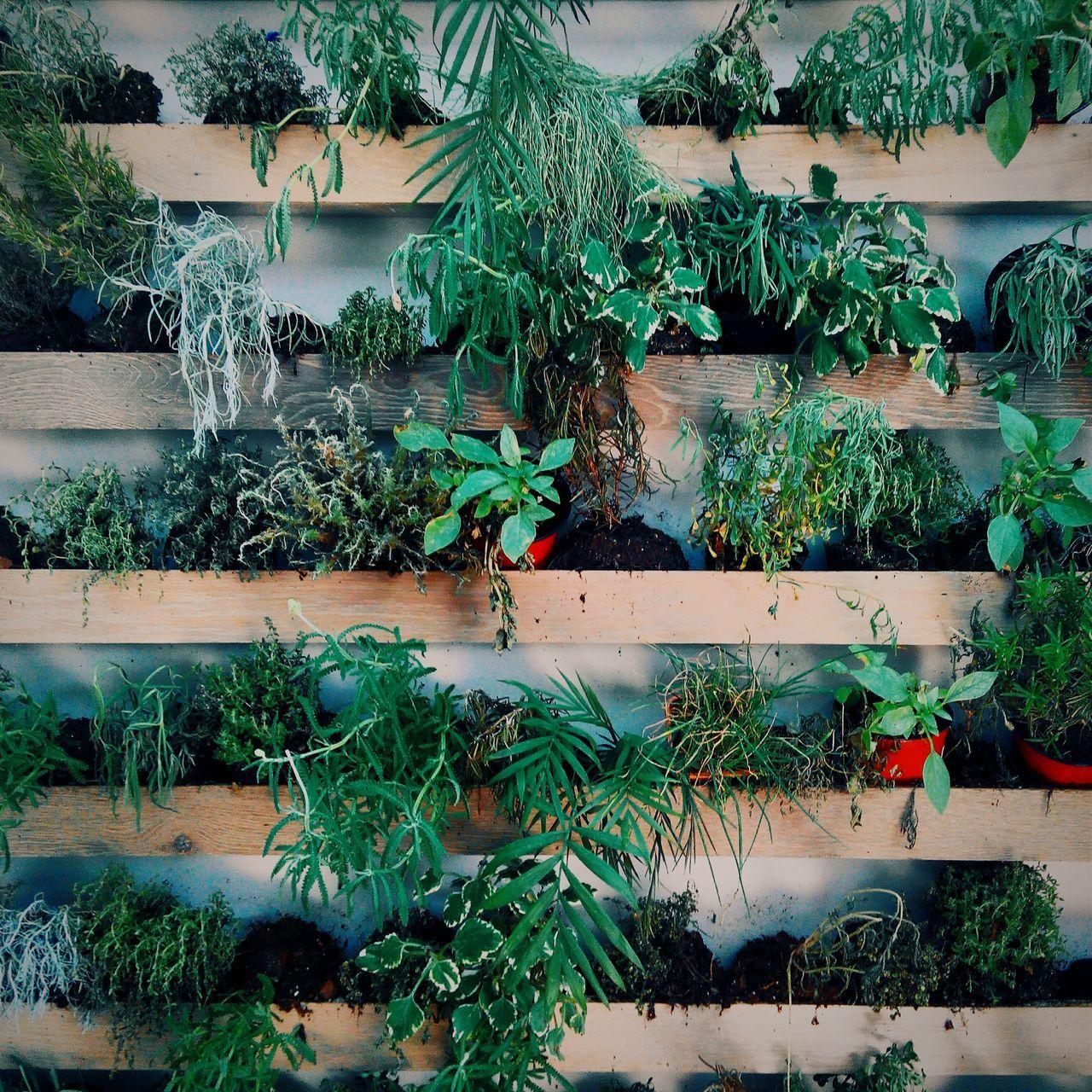 Interior Design Interior Architecture Interior Interior Decorating Plants Tomillo Aromaticherbs Aromatic Herb