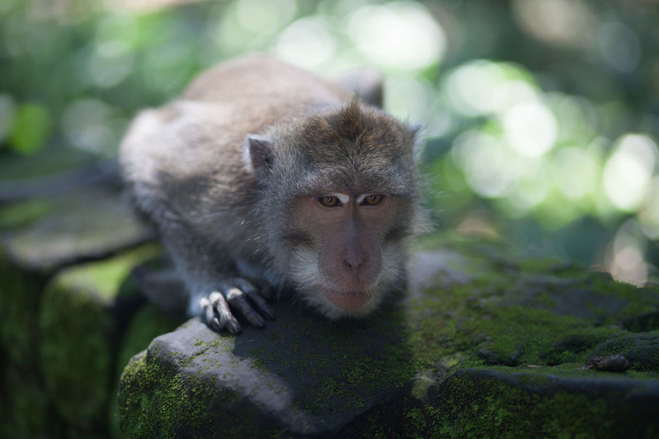 Beautiful stock photos of monkey, Animal Themes, Animals In The Wild, Beauty In Nature, Close-Up