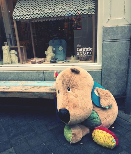 Lost Teddy Lost Teddy Bear Lonely Teddy Bear 🐻 In Maastricht Teddybär Maastricht Maastricht Holland Maastricht,NL Teddybären Stofftier Sweet Bear Süss Bisounours